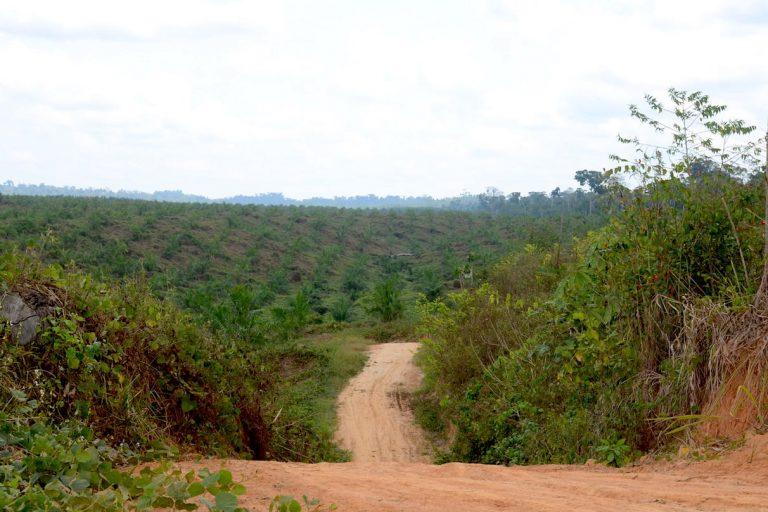 La llegada de cultivos de palma aceitera han ocasionado conflictos con las comunidades nativas en Ucayali. Foto: Yvette Sierra Praeli.