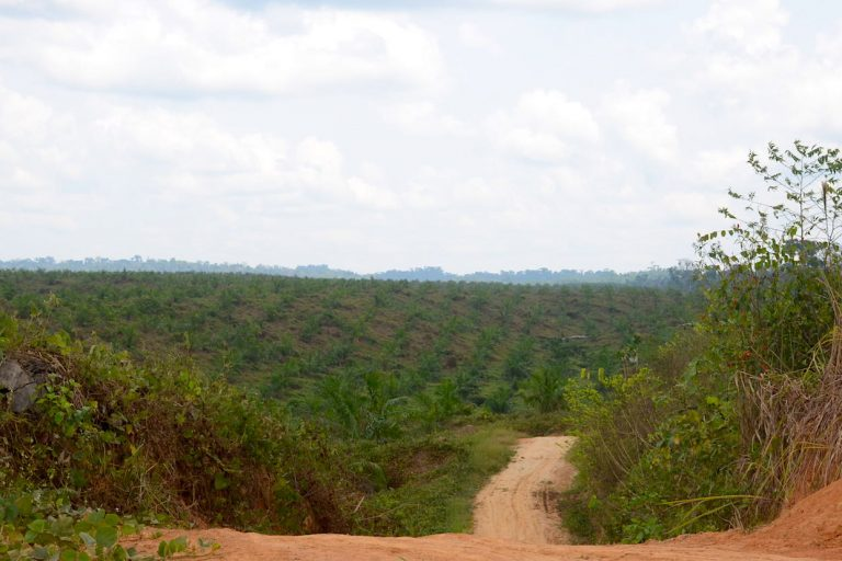 En Ucayali existen dos casos emblemáticos de procesos judiciales relacionados con los monocultivos de palma aceitera. Foto: Yvette Sierra Praeli.