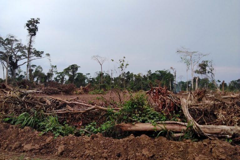 Ucayali es una de las regiones más deforestadas del perú. Foto: Yvette Sierra Praeli.