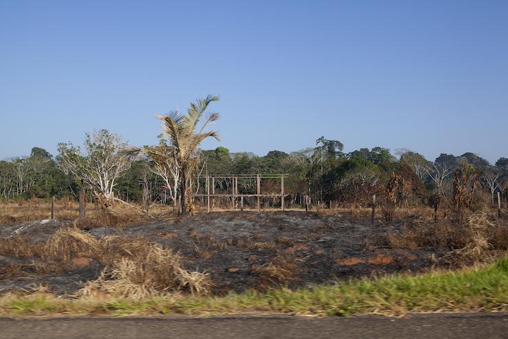 La deforestación avanza alrededor de Iberia y los dueños de las concesiones forestales temen seguir perdiendo su territorio. Deforestación registrada al pide de la carretera interoceánica. Foto: Rochi León.