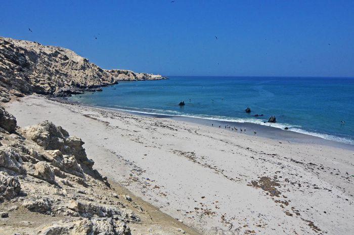 La Isla Foca fue incluida en la red mundial de Áreas de Importancia para la Conservación de Aves. Foto de Yuri Hooker.