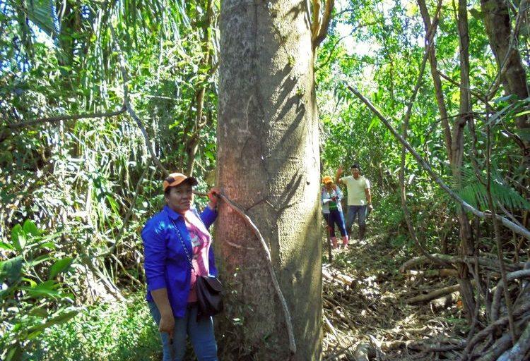 La castaña es uno de los recursos más importantes para el pueblo cavineño. Foto: OMINAB