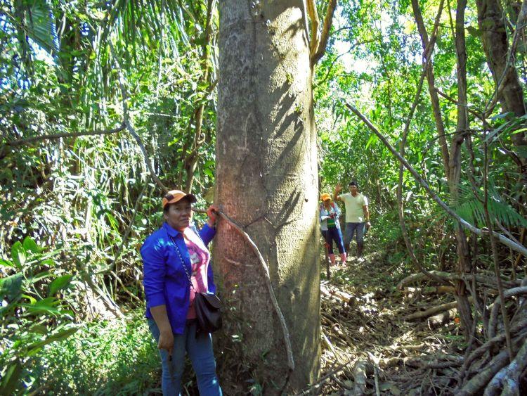 Marina Tabo junto a un árbol de castaña dentro del territorio indígena. Foto: OMINAB