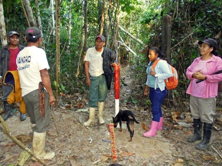 Los indígenas cavineños afirman que la prospección sísmica ha abierto caminos que pasan por medio del castañal. Foto: OMINAB