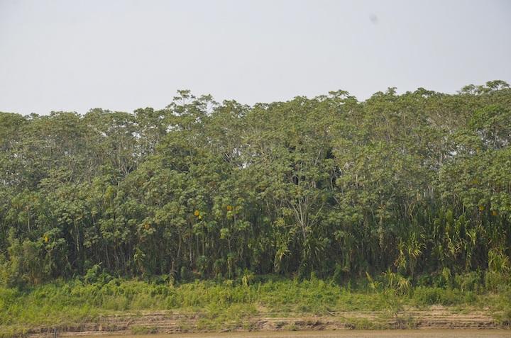 El Beni está cubierto de bosques y sabanas. Foto: Archivo Mongabay Latam.