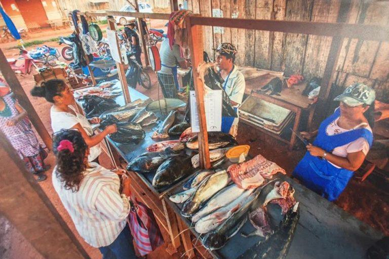 El paiche se ha convertido en un aliado de la economía de las familias bolivianas. Foto: Faunagua.