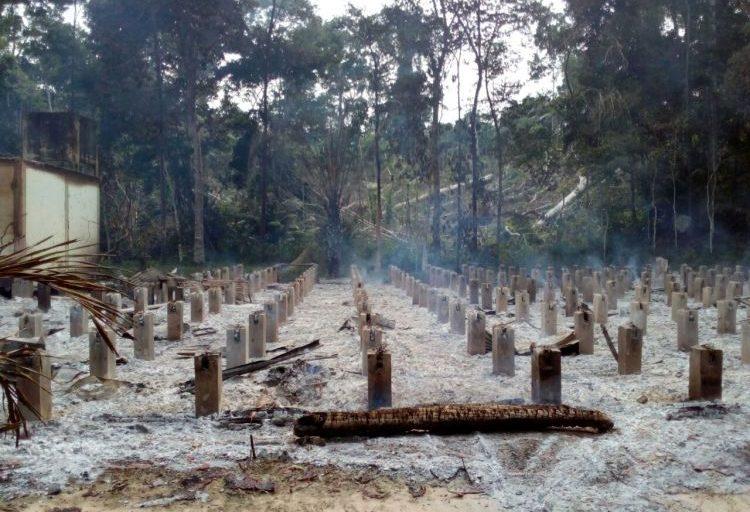 El Bosque Macuya fue invadido en 2017. Foto: Facultad de Ciencias Forestales y Ambientales.
