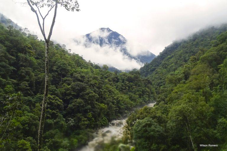 Día Internacional de los Bosques: En el Parque Nacional Río Negro- Sopladora existen 344 especies de plantas vasculares. Foto: Wilson Romero.