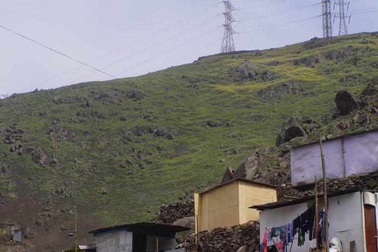 Lima posee casi 20 mil hectáreas de ecosistemas de lomas, distribuidas desde Ancón hasta Pucusana. Foto: PAFLA.