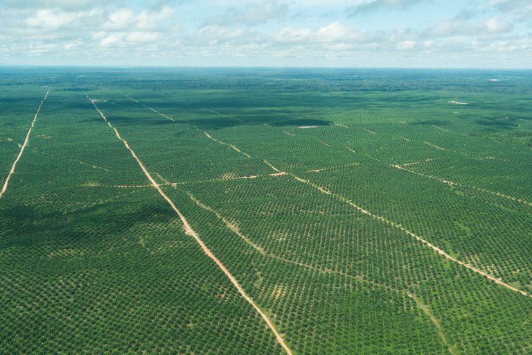 Son constantes los conflictos por la defensa de los bosques con el grupo Melka, que cultiva palma aceitera. Foto: EIA.