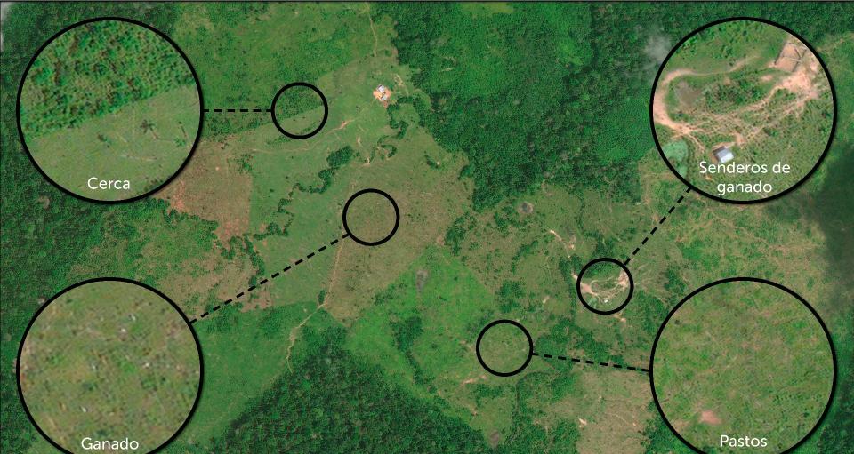 La ganadería es la causa principal de la deforestación en Colombia. Foto: MAAP