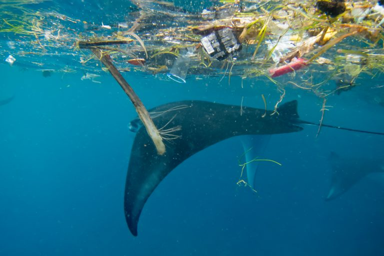 Desde 1980, la contaminación por plásticos se ha multiplicado 10 veces. Foto: Elitza Germanov / Fundación Megafauna Marina.