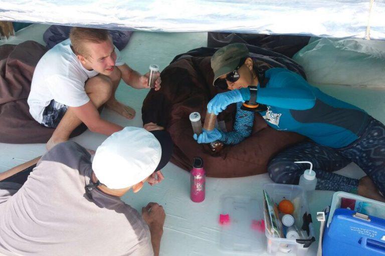 Investigadores recogen plancton con microplásticos adheridos para su posterior análisis. Foto: Fundación Megafauna Marina.