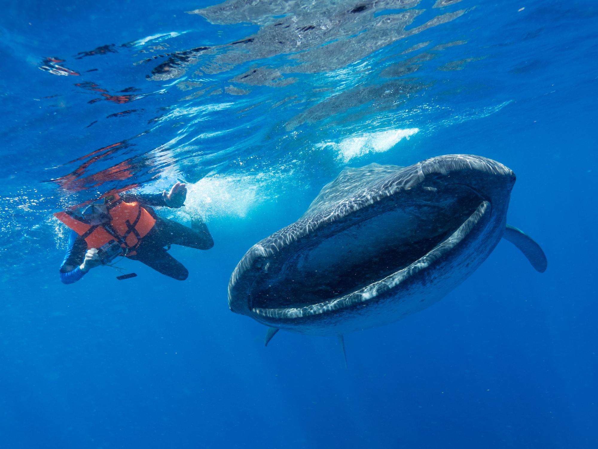La contaminación con microplásticos puede reducir el número de poblaciones de las especies de megafauna marina. Foto: Fundación Megafauna Marina