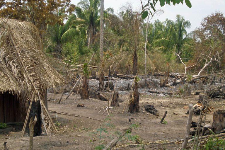 La destrucción del bosque seco tropical del Caribe colombiano pone en peligro la supervivencia de la tortuga carranchina. Foto: Germán Forero / WCS Colombia.