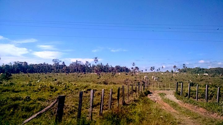 Rancho ganadero en Benemérito de las Américas, a menos de 5 kilómetros de un paso irregular del río Usumacinta. Foto: Rodrigo Soberanes.
