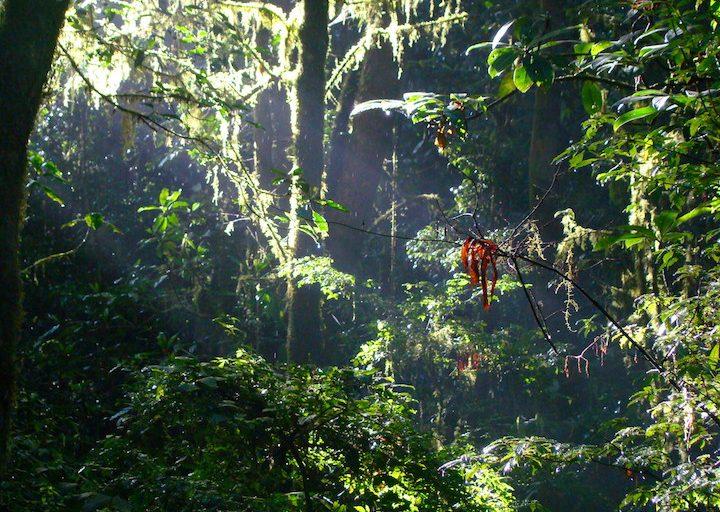 Vista de un paraje de la Selva Lacandona. Foto: Cortesía Ecosur.