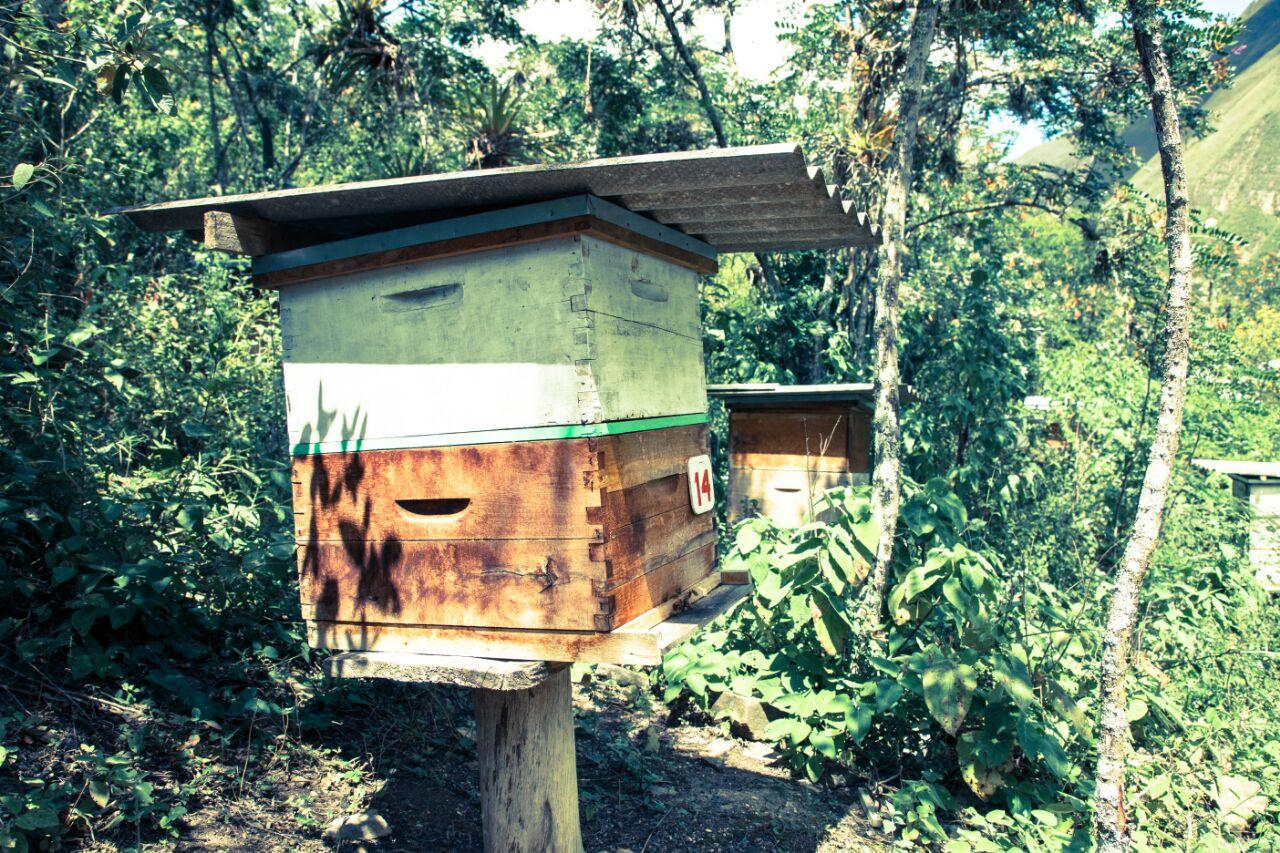 En el ACP Milpuj La Heredad también se realizan actividades como la apicultura. Foto: Pedro Heredia / Wagner Guzmán.