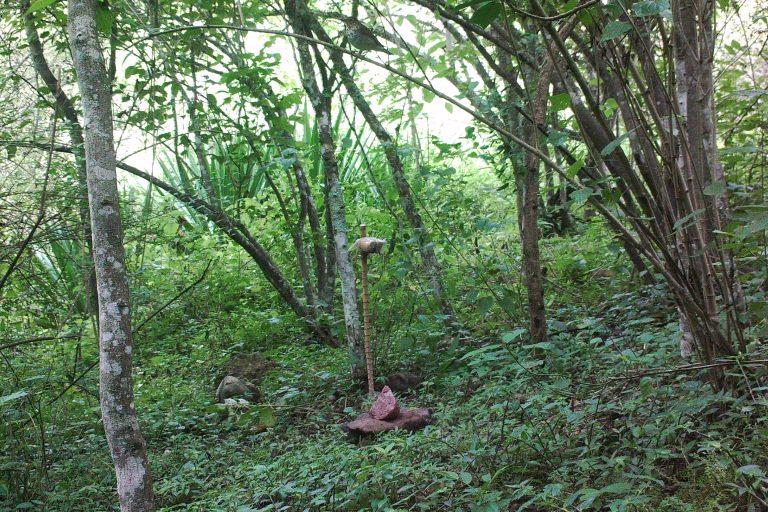Para conocer la fauna de la zona se instalaron cámaras trampa. Foto: Pedro Heredia / Wagner Guzmán.