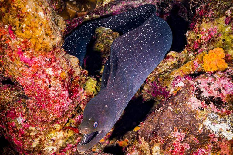 Morena al noroeste de las Islas Galápagos. Foto de Greg Asner/DivePhoto.org