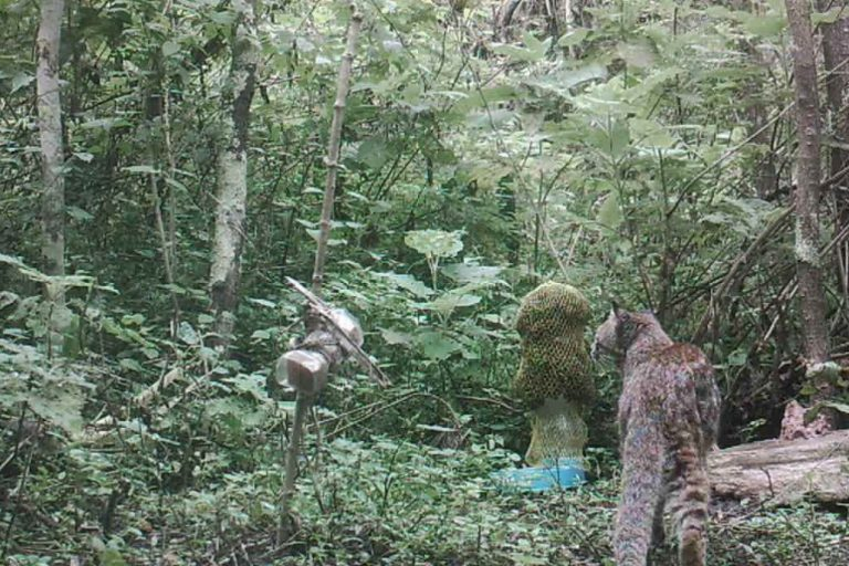 Más leídas: Entre noviembre del 2014 y comienzos del 2017 se recopilaron videos registrados con cámaras trampa instaladas en el área de conservación Milpuj La Heredad en la región Amazonas. Foto: ACP Milpuj La Heredad
