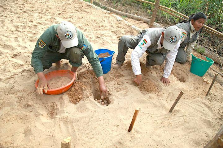 Guardaparques de la Reserva EBB realizan tareas en la playa artificial del Proyecto Quelonio. Foto: Proyecto Quelonio, Reserva EBB.