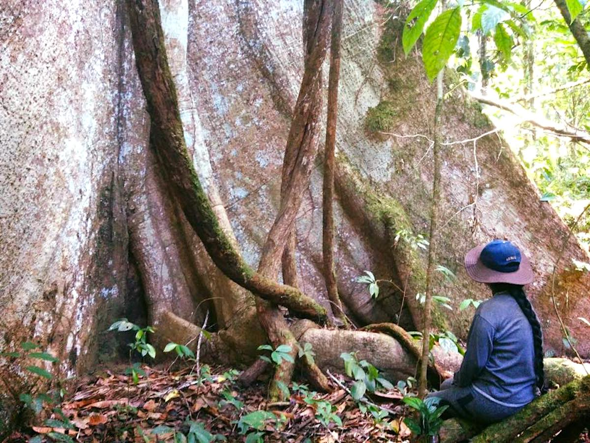 Árboles ancestrales de la comunidad Sarayaku, ubicada en la Amazonía ecuatoriana. Foto: Cortesía Patricia Gualinga.