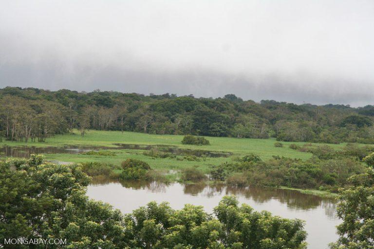 La Amazonía colombiana tiene gran biodiversidad. Foto: Rhett A. Butler / Mongabay