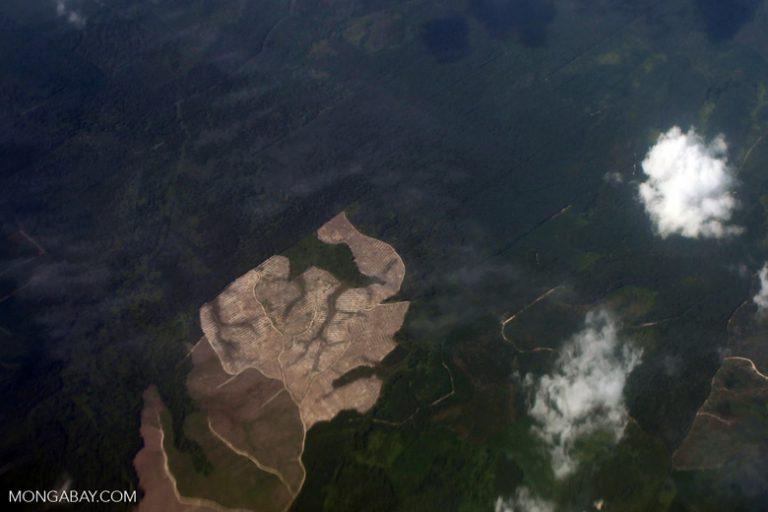 El avance de la deforestación en Indonesia por la agricultura industrial. Foto: Rhett A. Butler