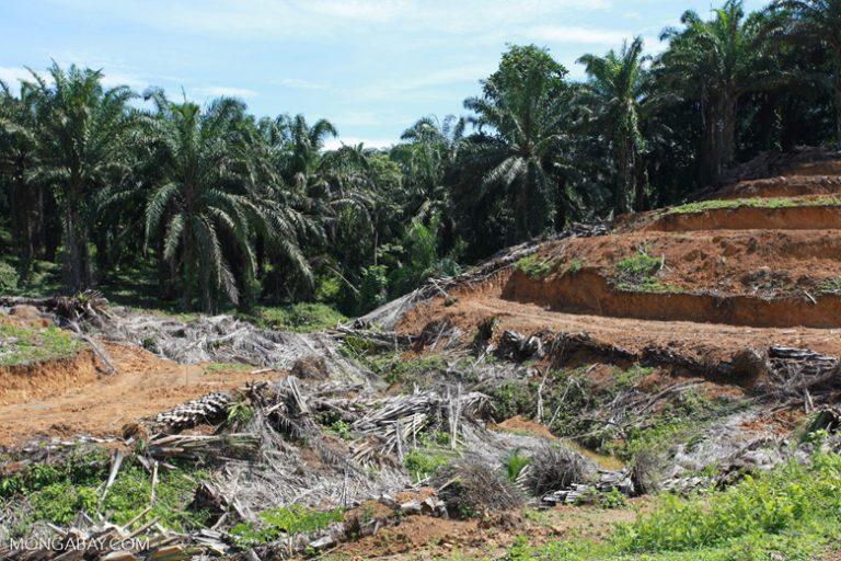 Una plantación de palma cerca al Parque Nacional Gunung Leuser en Indonesia. Imagen referencial. Foto: Rhett A. Butler