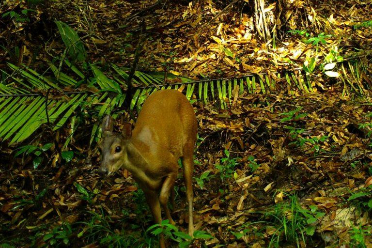 Desde el año 2009, según el Reporte de Biodiversidad 2016 publicado por el Instituto de investigaciones Alexander Von Humboldt, se utiliza en Colombia esta técnica de muestreo no invasiva.