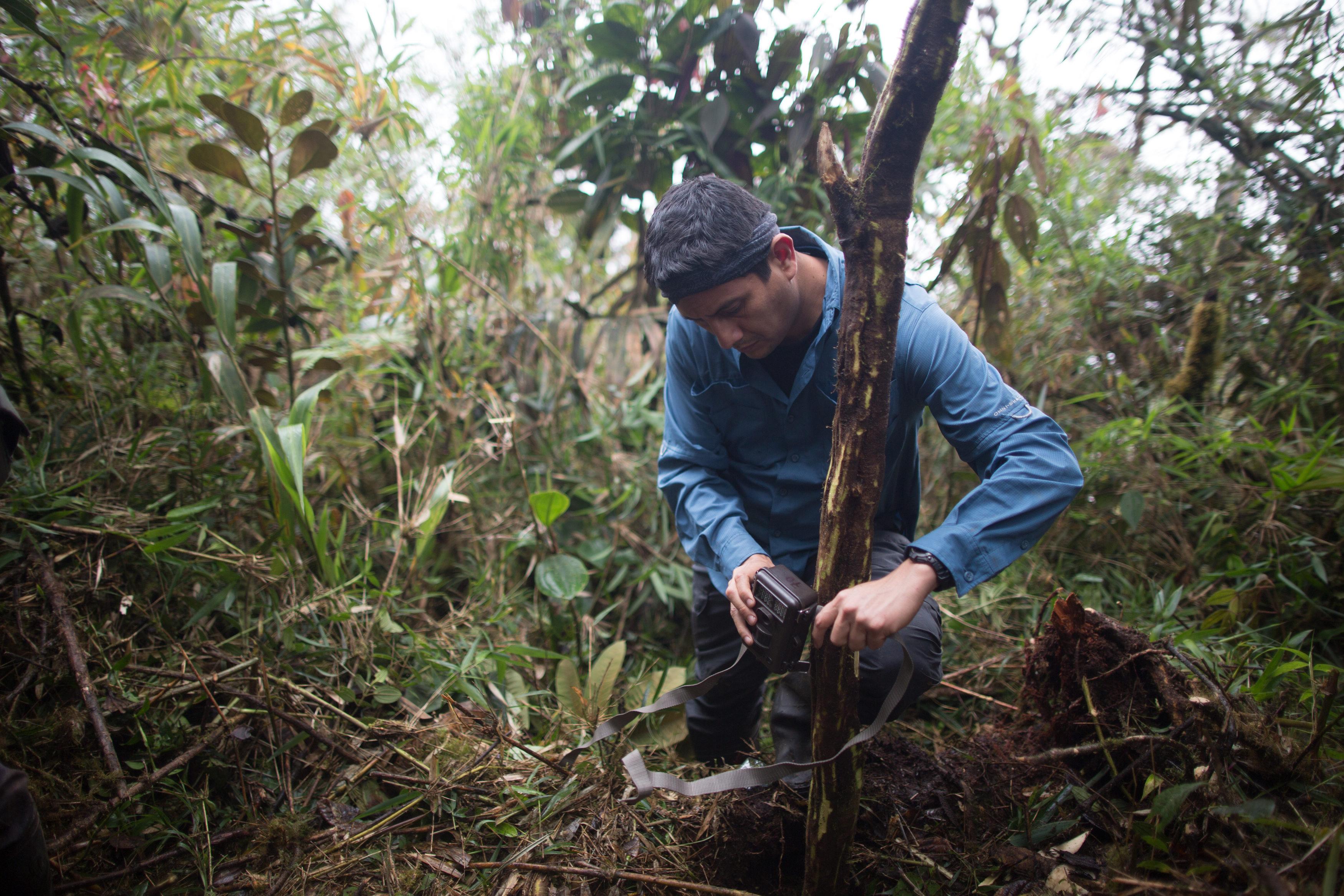 José Luis Mena lidera un proyecto con cámaras trampa y monitores acústicos. Foto: WWF.