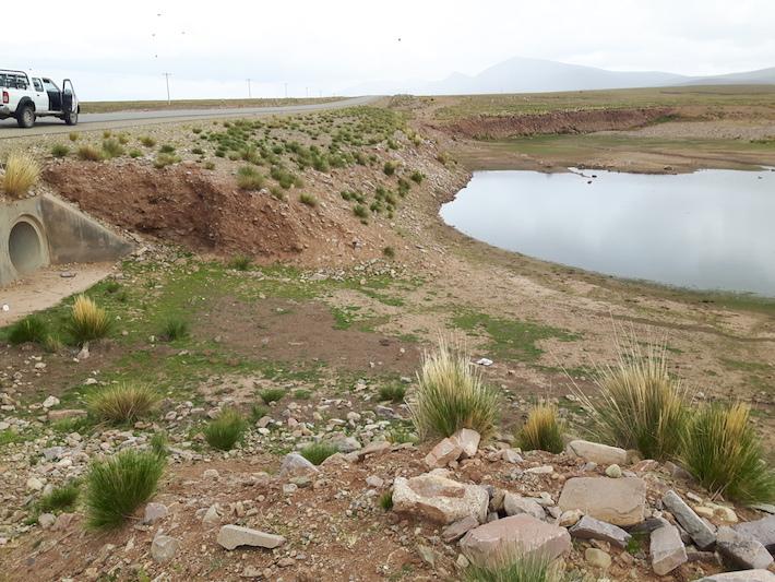 La ganadería genera un desequilibrio dentro de la reserva, sostienen los expertos. Foto: Sernap.