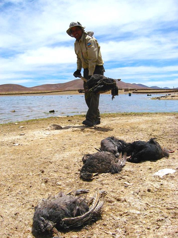 Numerosos patos murieron durante la última sequía. Foto: Sernap.