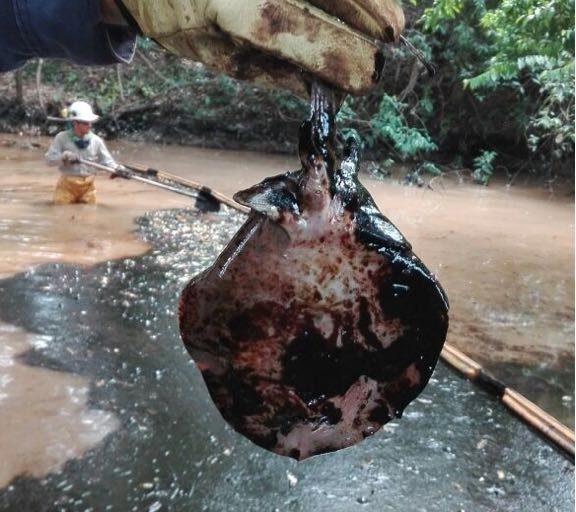 Entre los peces más afectados se encuentra el bocachico, muy común en el Magdalena y sus afluentes. Foto: Fundación de periodistas víctimas del conflicto armado en Colombia (FUNPERPAZ).