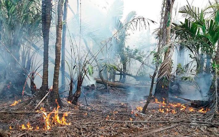 Incendio en la Reserva Indio Maíz. Foto: Cortesía El 19 Digital.