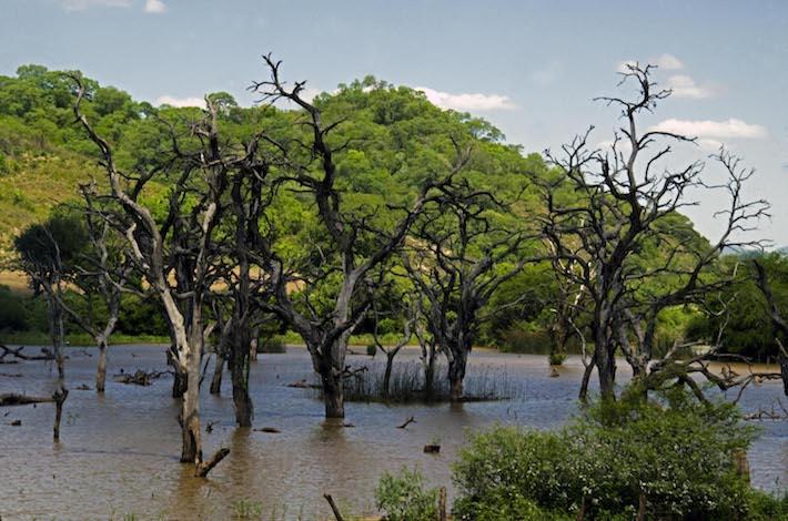 La represa Rositas inundará 45.000 hectáreas del Área Natural de Manejo Integrado (ANMI) Río Grande Valles Cruceños, un área altamente biodiversa. Foto: Eduardo Franco Berton