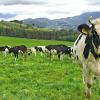 MinAgricultura Colombia actualiza el precio de la leche cruda. Foto: Ministerio de Agricultura de Colombia.