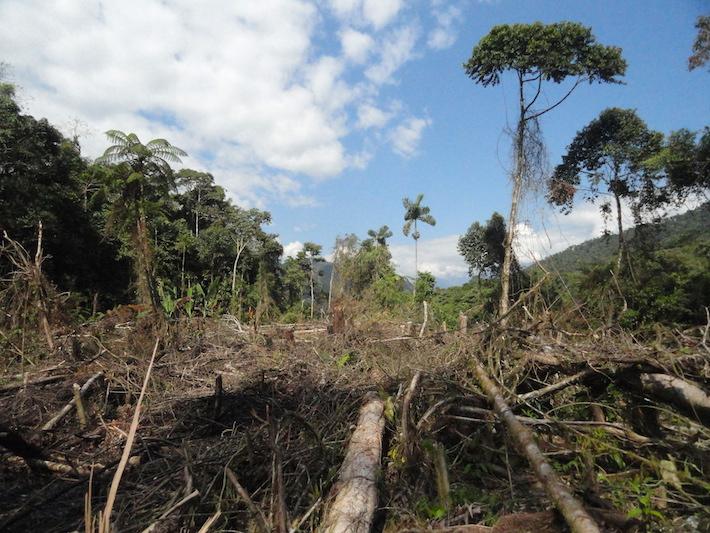 La destrucción de los bosques de Camanti es algo que preocupa a todos. Organizaciones civiles y hasta las Naciones Unidas están buscando mejorar la situación en esta parte de Cusco. Foto: Serfor Cusco.