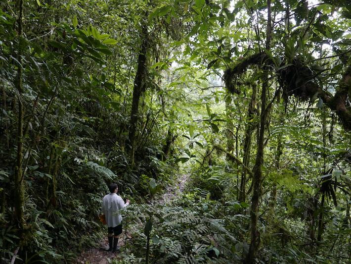 Parte del bosque de la Concesión para Conservación Soqtapata. José, uno de los hijos de Rafael, dejó todo en Lima para involucrarse en este emprendimiento familiar que los llena de orgullo y emoción. Foto: Jack Lo Lau.