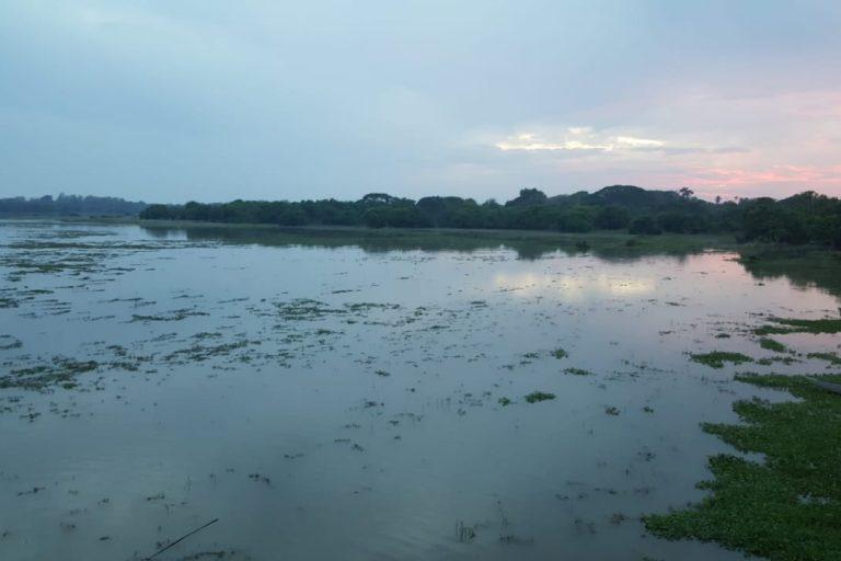 El complejo cenagoso de Zapatosa se convirtió en el décimo sitio Ramsar de Colombia. Foto: Ministerio de Ambiente de Colombia.