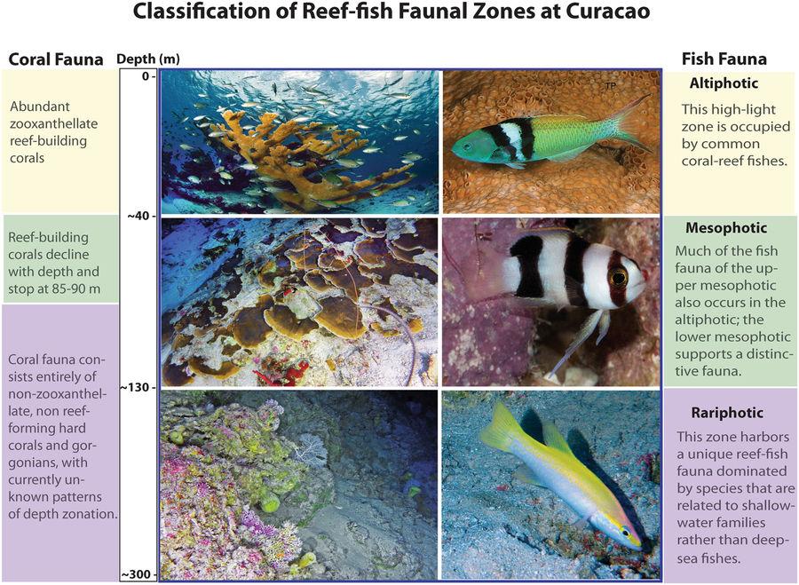 Bajo el mar: nuevos y extraños peces en el océano profundo del Caribe
