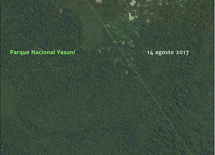 En 2017 las carreteras dentro del Parque Yasuní no eran tan visibles. Crédito: MAAP, Amazon Conservation Team