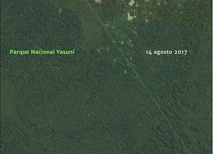 En 2017 las carreteras dentro del Parque Yasuní no eran tan visibles. Crédito: MAAP, Amazon Conservation Team