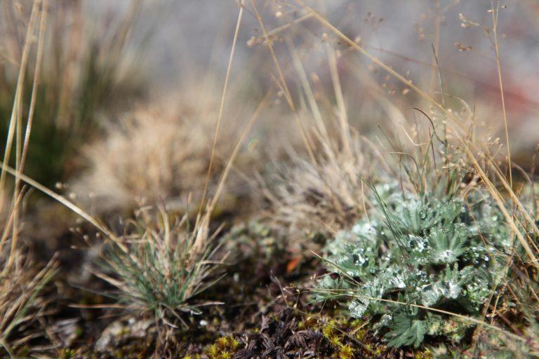 Vegetación típica de zona de páramo. Foto: Agencia de comunicación CONSTRUYENDO REGIÓN.
