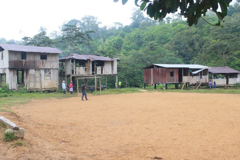 Algunos jóvenes Awá trabajan como empleados de las palmicultoras. Foto: Comunidad Awá Pambilar.