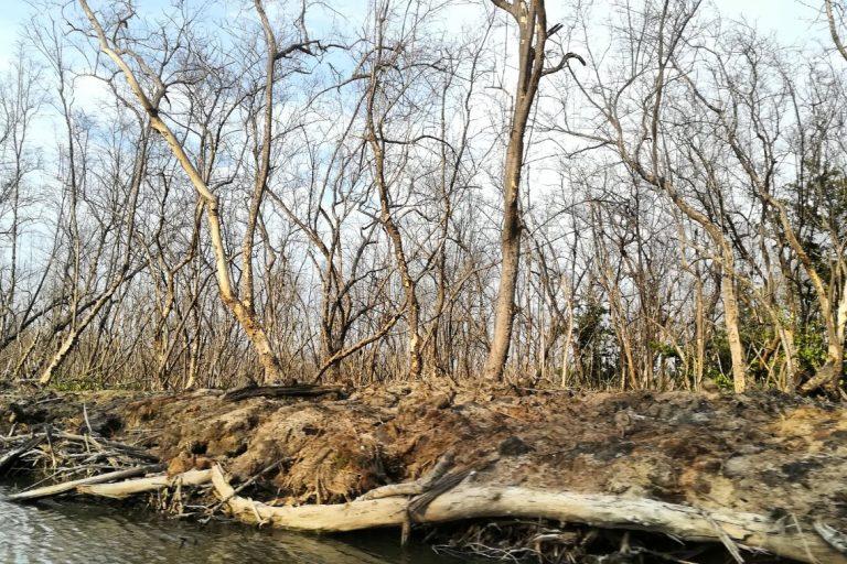La salinización del agua de la Ciénaga ha matado a los manglares y con ellos han desaparecido varias especies de fauna de la que vivían los pescadores. Foto: Sandra Vilardy