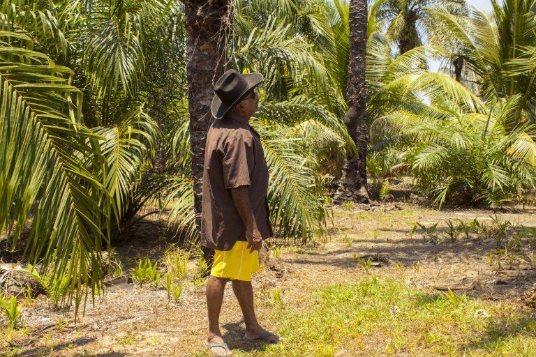 El 11% del Parque Kawas protegida ha sido carcomida por 9140 hectáreas de palma africana. En las últimas dos décadas se han perdido 2254 hectáreas de bosques, más que 4500 campos de fútbol. Foto: Jessica Guifarro