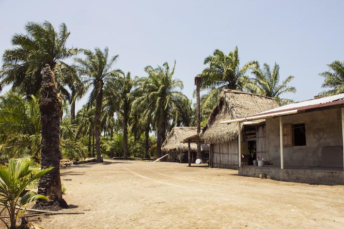 Casa de Salomón Urbina, localizada en sus 11 hectáreas de tierra, cultivadas con palma africana en la zona núcleo del Parque Nacional Kawas. Tela, Honduras, Abril 2017. Foto: Jessica Guifarro.