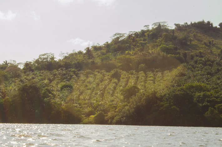 En la cumbre del Cerro de los Cerritos los cultivos de palma africana se asoman en la orilla de la Laguna de los Micos, a su lado zonas de bosque deforestadas y quemadas. Foto: Jessica Guifarro.